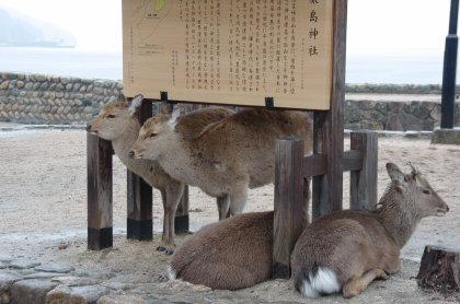 itsukushima_003.jpg